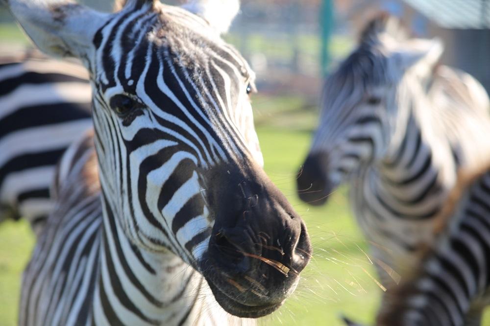 Safaripark Stukenbrock auf Gemischte Tüte Glück